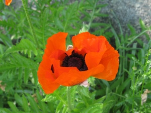 "Bonnie Tower ""Poppy"""