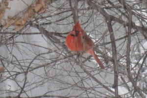 "Peg Ridgely's ""Winter Cardinal"""